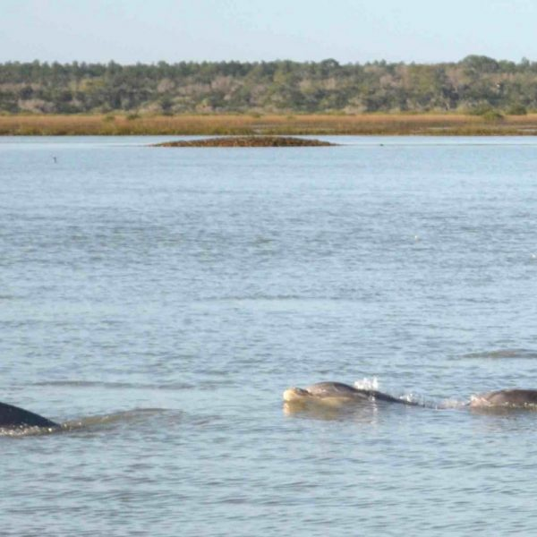 cropped-Matanzas_Dolphins2-scaled-1.jpeg